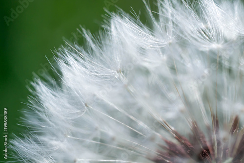 Spring and dandelions - 199638489