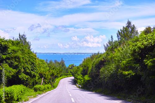 Fotobehang Weg in bos 真夏の宮古島、伊良部島の海へ下る道