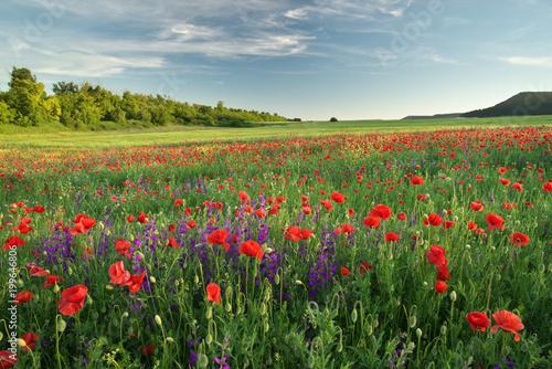 Foto Murales Spring flowers  in meadow.