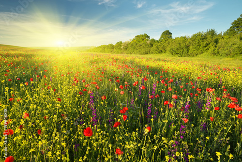 Fotobehang Zomer Spring flowers in meadow.