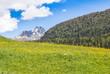 Field of spring dandelions - 199665266