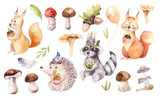 Cute watercolor bohemian baby cartoon hedgehog, squirrel and moose animal for nursary, woodland isolated forest illustration for children. Bunnies animals. - 199684076