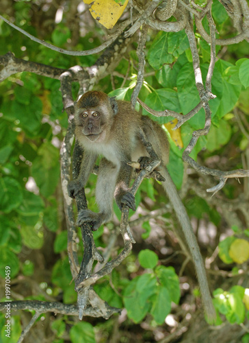 Małpa w gałęziach