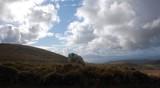 Doolin Ireland Sheep