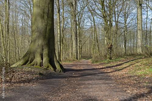 Fotobehang Weg in bos Chemin forêt sentier bois arbre paysage