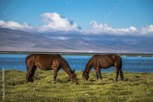 Fotobehang Blauw Horses near Song kul lake