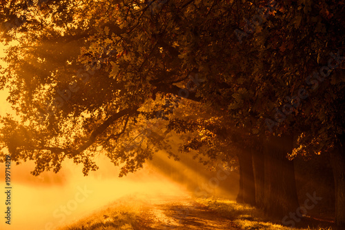 Panel Szklany sunrise with rays on the background of a foggy mysterious path in the park