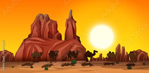 Fototapeta A Desert Scene with Camels