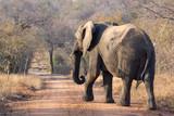 big five safari in kapama game reserve - south africa - elephants and Rino