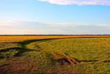 Dirt road in field at sunset in early spring. Beautiful evening nature, rural landscape, springtime - 199764261