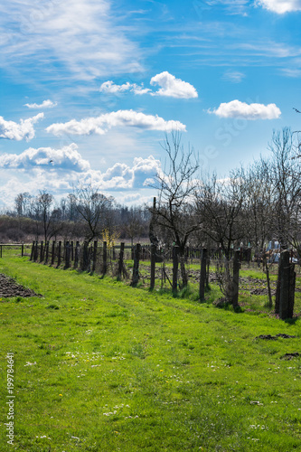 Foto op Aluminium Blauw View of a garden on a farm in spring with fresh grass and a tree blooming with bright yellow flowers on a sunny day