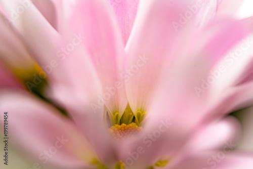 Spring Flower Macro - 199789454