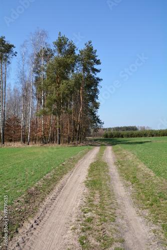 Fotobehang Weg in bos droga przez pola i las