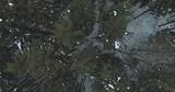 Aerial top view over winter fir forest