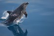 dolphin, water, sea, ocean, mammal, animal, blue, marine, whale, swimming, fish, fin, nature, dolphins, swim, wildlife, wild, underwater, jumping, bottlenose, mammals, flipper, life, splash, animals