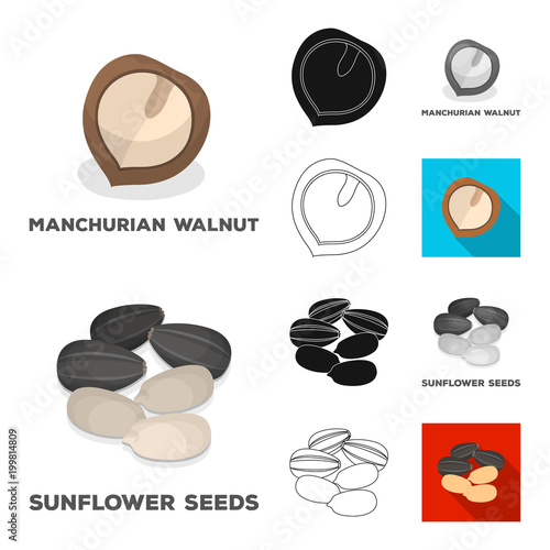 Different kinds of nuts cartoon,black,flat,monochrome,outline icons in set collection for design.Nut Food vector symbol stock web illustration.