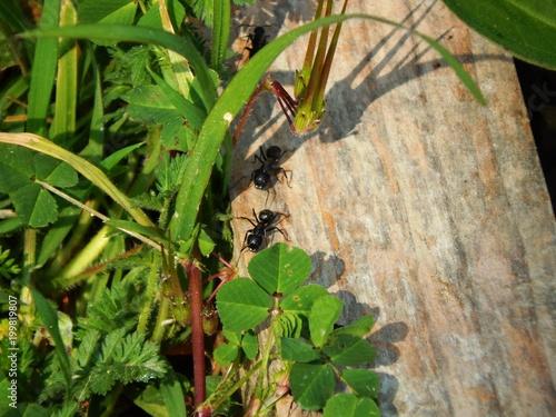 Foto Murales La balade des fourmis