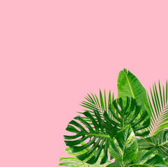 Tropical green leaves frame over pastel pink background with copy space