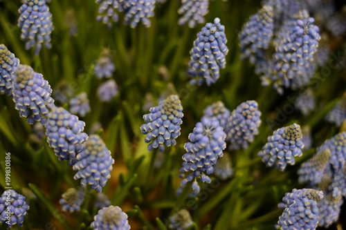 Fotobehang Lavendel Fleurs