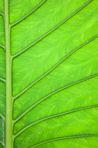 Plant leaf - 199831812