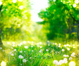 Spring nature scene. Park with dandelions, green grass, trees and flowers. Beautiful landscape.