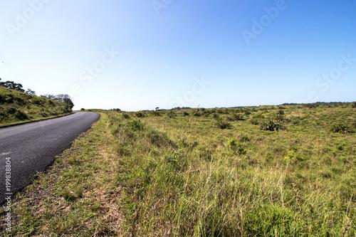 Foto op Plexiglas Natuur Natural Wetland Vegetation at iSimangaliso Wetland Park in Zululand