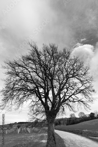Foto op Canvas Wit Bare trees in the countryside, black and white landscape