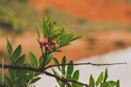 Foto Murales flores