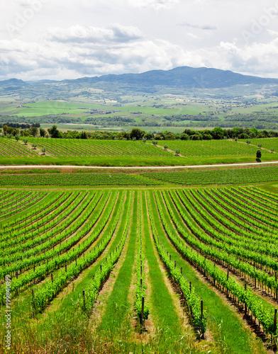 Deurstickers Wijngaard Chianti vineyard landscape in Tuscany, Italy
