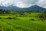The Tegallalang Rice Terraces in Bali, Indonesia - 199867459