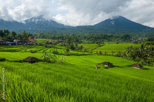 Fotobehang Rijstvelden The Tegallalang Rice Terraces in Bali, Indonesia
