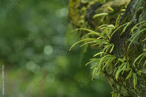 緑の葉 苔の生えた樹木