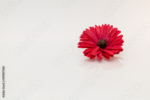 Aluminium Gerbera Red flower on white background.
