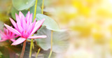 Horizontal banner with beautiful pink lotus flower