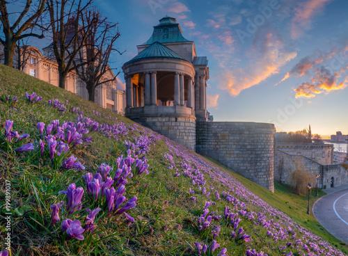 Krokusy kwitnie na Haken tarasie w Szczecińskim, Polska.