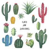 Watercolor vector set of cacti and succulent plants isolated on white background. - 199894072