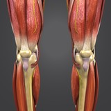 Lower Limbs with Nerves Anterior view - 199897868