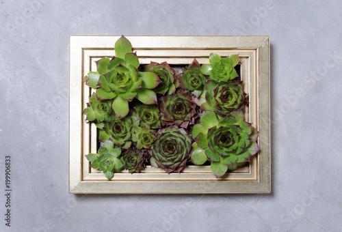 Foto Murales succulent plants decoration