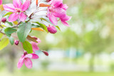 Blossom of pink sakura flowers on a spring tree branch in a park - 199908411