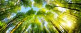 Grüne Baumkronen im warmen Sonnenschein als Panorama