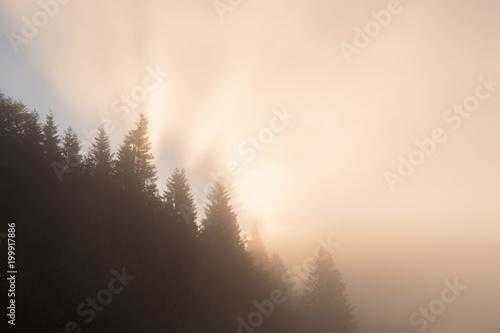 Sonnenstrahlen im nebel scheinen hinter den Bäumen