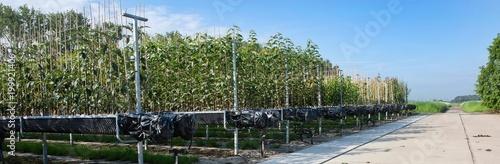 Tree nursery - 199921406