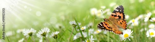 Schmetterling 428 - 199923013