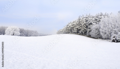 Foto Murales Winter landscape. Snow everywhere, white trees and meadows
