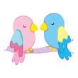 beauty parrot couple bird animal