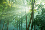 forest trees. nature green wood with sunlight - 199939886