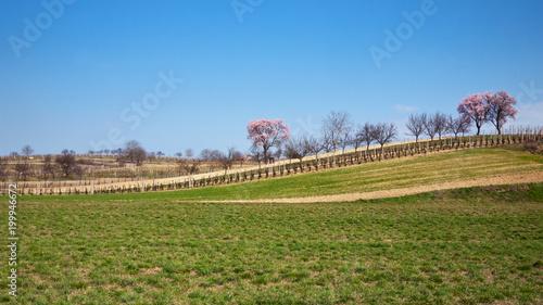 Deurstickers Wijngaard Spring landscape on a sunny day