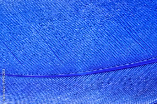 niebieski ptak pióro tekstury tła, makro