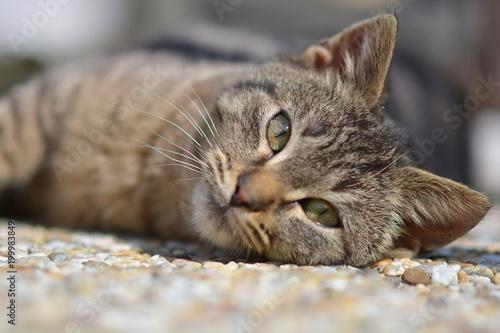 grając młodego kota domowego