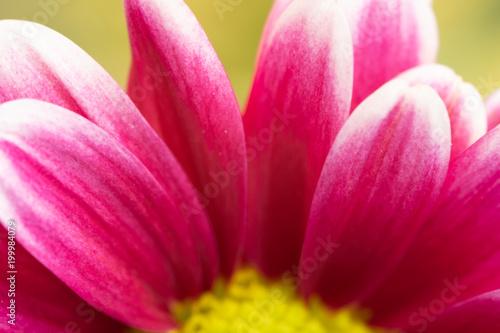 macro of flower petals - 199984079